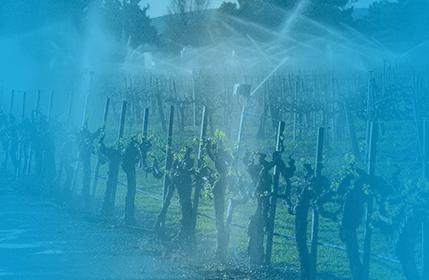 систем поливу на виноградниках